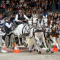 Excitement and Top Driving Sport guaranteed at FEI World Cup™ Driving Final in Gothenburg