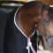 The Saint-Lô stallion show : 150 of the best stallions in the World !