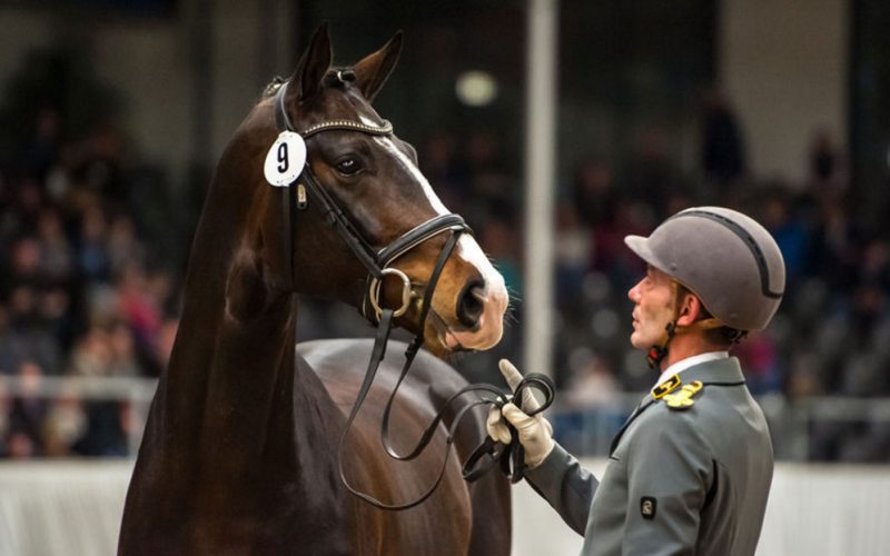 Verden: Five young stallions awarded Weltmeyer- and Stakkato-Prizes