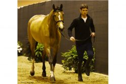 Jumping Horse Inspection Held at FEI World Cup Finals Omaha 2017