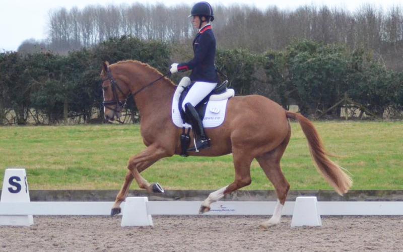 Charlotte Dujardin estreou-se com o seu novo cavalo «Gio»