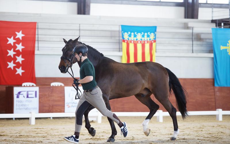 CDI3* Medina-Sidonia: Cavalos nacionais passam no Vet-Check