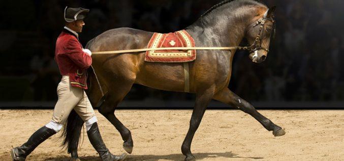 Escola Portuguesa de Arte Equestre estreia nova coreografia