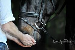 Conseguem os cavalos detectar traumas mentais em humanos?