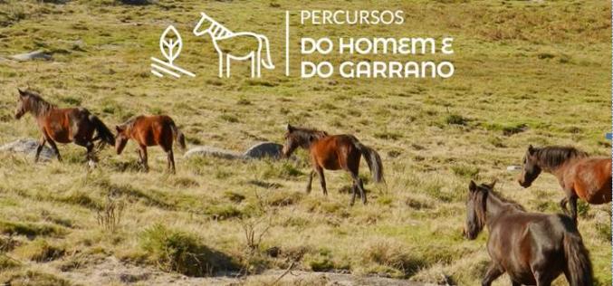 Roteiro de percursos dá a conhecer a raça Garrana – Viana do Castelo