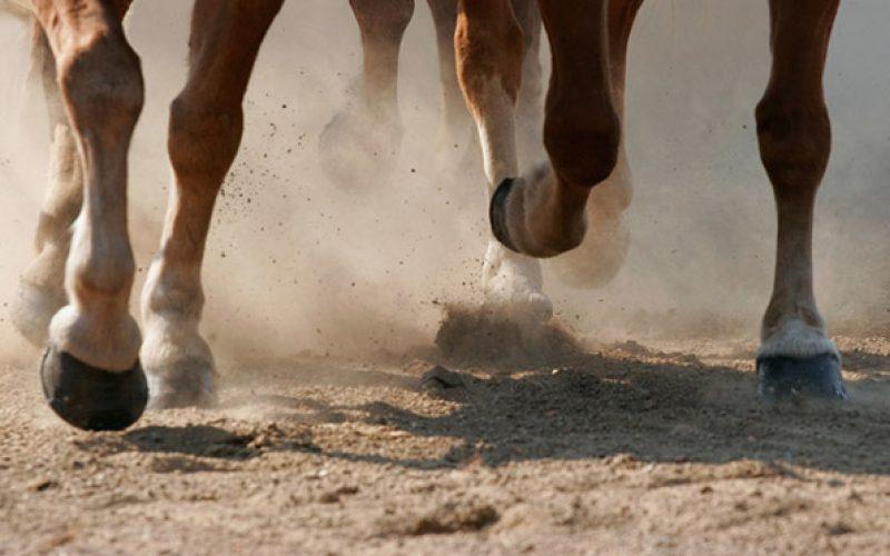 ANEID promove novo curso: Banda neuromuscular e a sua aplicação em cavalos