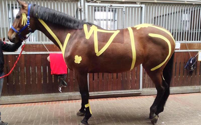 Abertas as inscrições : Curso VETKIN TAPE e a sua aplicação em Cavalos
