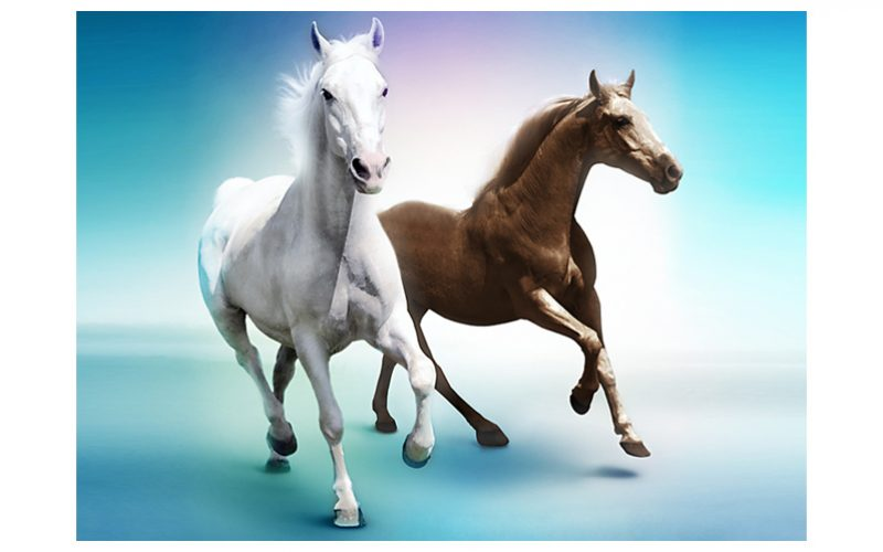 Leilão de 30 equinos em Alfeizerão
