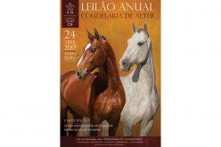 18 Equinos serão levados ao Leilão em Alter – 24 de Abril