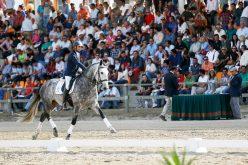 Coudelaria de Alter: Leilão de cavalos rende 89.800 €