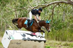 Austrália: Cavalo lesionou-se após derrube de obstáculo de cross-country