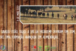 Formação avançada em nutrição e alimentação do cavalo