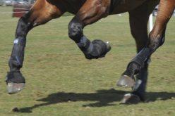 FEI anuncia dois casos de doping