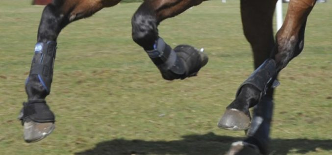 Prohibited substance cases under FEI anti-doping rules