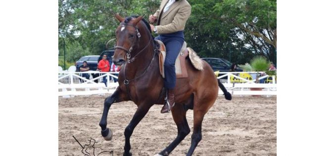 Salvaterra de Magos acolheu III Jornada do Campeonato Regional de Equitação de Trabalho