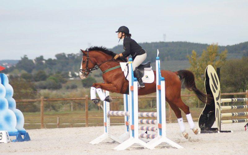 Abrantes: Cavalo de desporto cai dentro de poço em Mouriscas