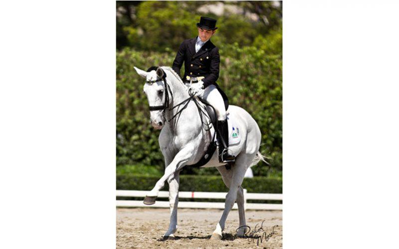 «Nilo VO» o pequeno cavalo de grande coração passa à reforma (VÍDEO)