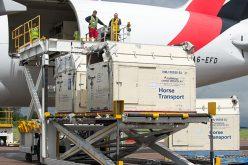 Emirates SkyCargo transporta perto de 100 cavalos por três continentes