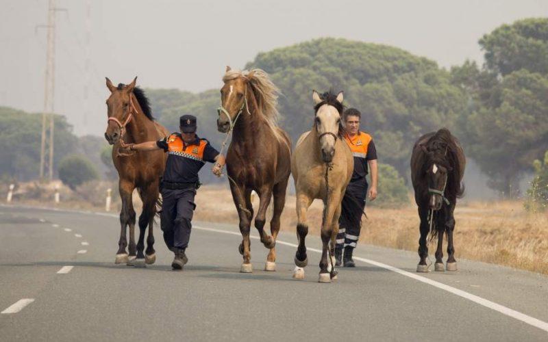 Huelva: Picadeiro e 40 cavalos salvos das chamas