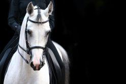 Cavalos apropriados!