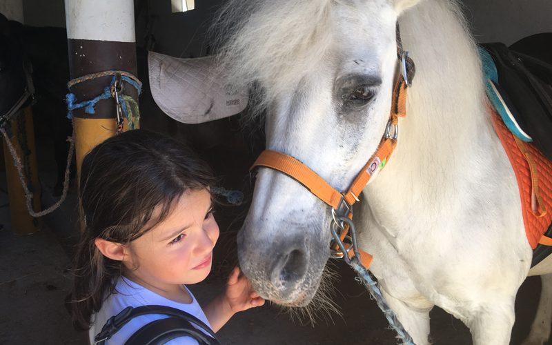 Academia Equestre João Cardiga – Férias a Galope 2017