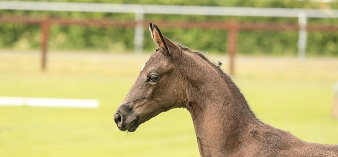 Foal and Broodmare Auction on August 4/5 (VIDEO)