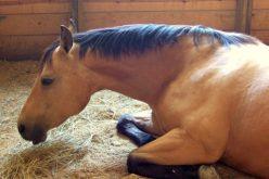Alerta: 2 cavalos diagnosticados com Anemia Infecciosa Equina em Espanha
