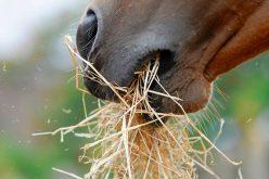 Novas recomendações sobre forragens conservadas para cavalos