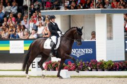 World Breeding Dressage Championships for Young Horses: Two Hanoverians World Champions