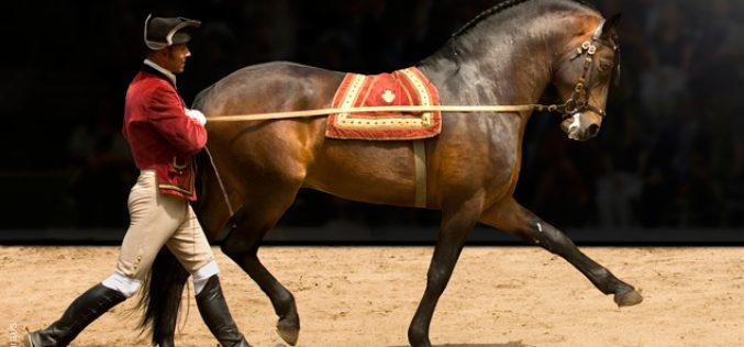 Gala da Escola Portuguesa de Arte Equestre – Despedida dos cavalos «Jobim, «Timóteo» e «Vejetal»