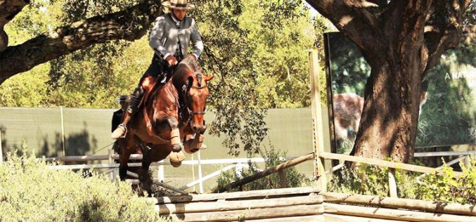 Gilberto Filipe sem rival na Equitação de Trabalho