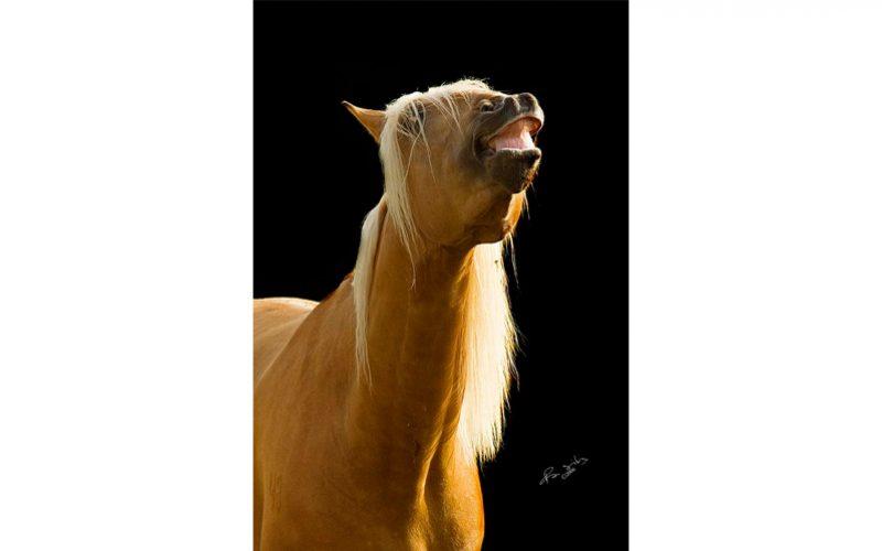 O Olfato do Cavalo