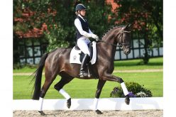XXXVIII. P.S.I. Auction • Dressage Collection Online!