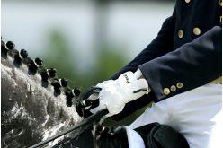 APSL: Projecto de Cavalos Jovens Lusitanos de Ensino