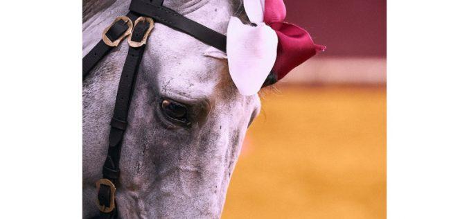 Cavalos de toureio à prova em Beja – A 6 e 7 de Outubro