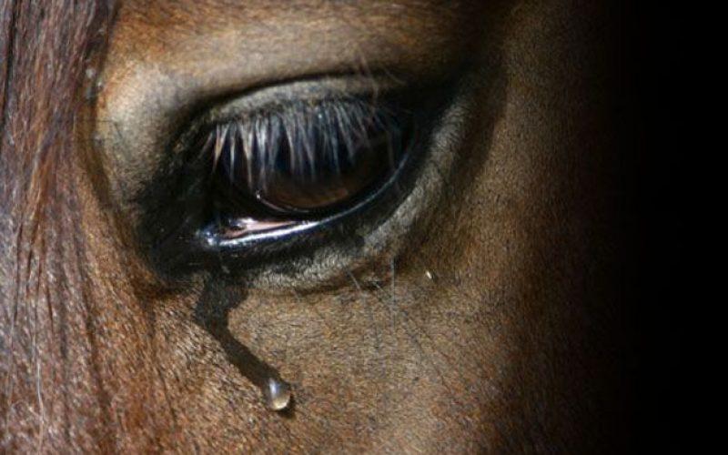 É desta que passa a ser crime maltratar cavalos?