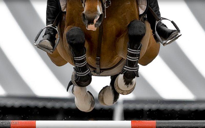 6 Cavaleiros portugueses em competições internacionais este fim-de-semana