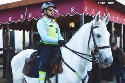 Feira Nacional do Cavalo 2017: GNR auxiliou 2.603 visitantes e passou 198 contraordenações