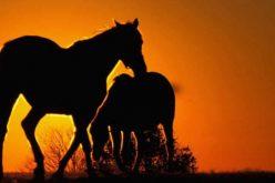 Mais de 70 cavalos abandonados recolhidos em Évora