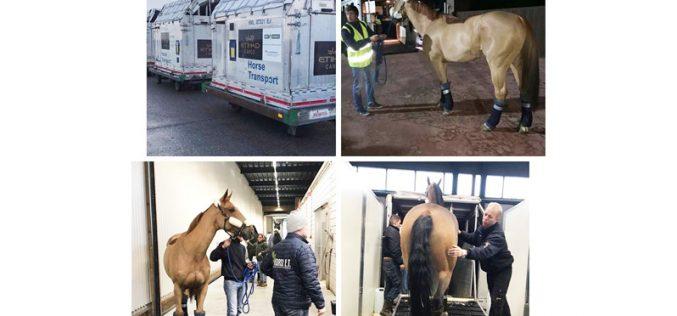 Quadra de Cavalos de Luís Sabino Gonçalves já chegou ao Dubai