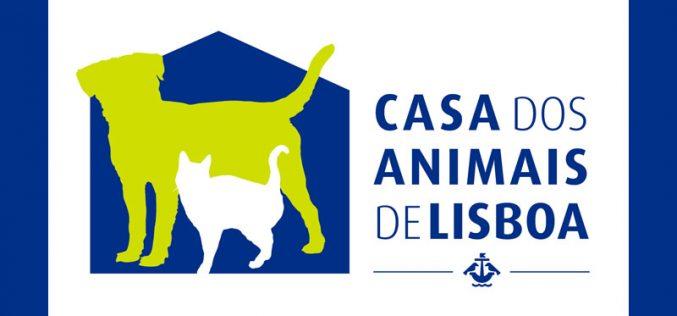PSP apanha cavalo em avenida de Lisboa