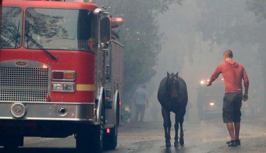Cerca de 30 cavalos morrem em incêndio – Califórnia (VÍDEO)