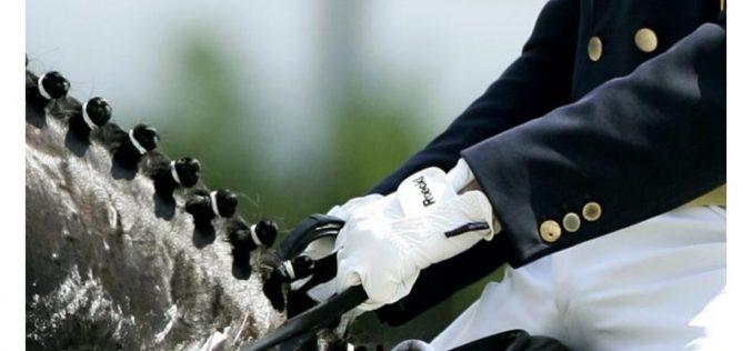 APSL: Projecto de Cavalos Lusitanos Novos de Ensino: 37 conjuntos inscritos