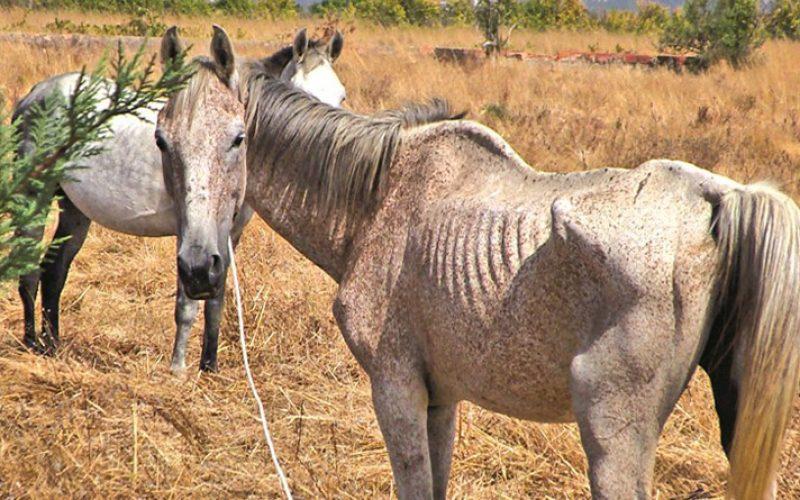 Deixar animais a pastar em terrenos não vedados pode dar multa de 2.500 euros