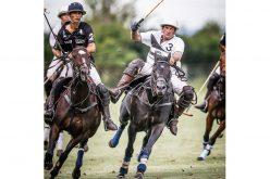 O mistério da morte de 16 cavalos no regresso de um jogo de Polo na Tasmânia