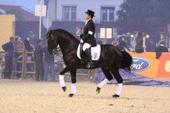 Ritmo e Cadência em Equitação