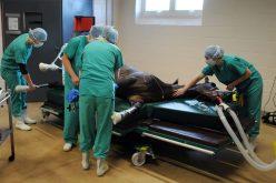 O efeito de múltiplos episódios de anestesia na qualidade do recobro em equinos