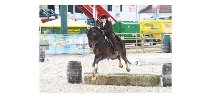 Inscrições abertas para a 1ª jornada do Campeonato Regional Norte de Equitação de Trabalho