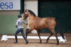 CDI3* Toledo: Cavalos nacionais passam no Vet-Check