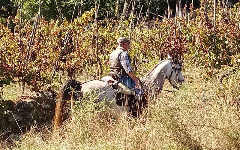 Peregrinação a cavalo abre época no caminho que liga Braga a Santiago